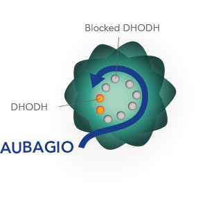 AUBAGIO blocks the DHODH enzyme.