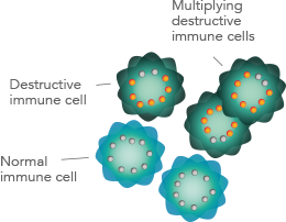 Multiplying destructive immune cells in Relapsing Multiple Sclerosis